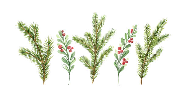 Watercolor vector Christmas card with fir branches and red berries Watercolor vector Christmas card with fir branches and red berries. Illustration for greeting cards and invitations isolated on white background. berry fruit stock illustrations