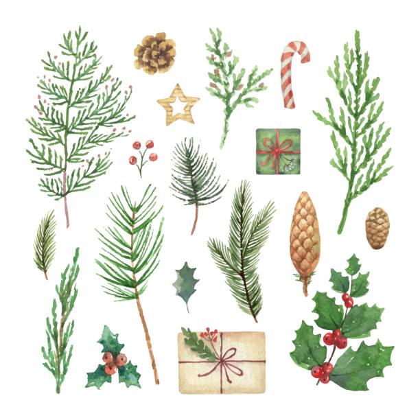 akwarela wektorowy zestaw świąteczny z wiecznie zielone gałęzie drzew iglastych, jagody i liście. - gałązka stock illustrations