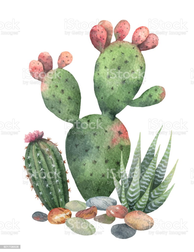 Watercolor Vector Collection Of Cacti And Succulents Plants Isolated On White Background Royalty Free