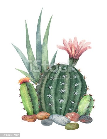 Watercolor vector collection of cacti and succulents plants isolated on white background. Flower illustration for your projects, greeting cards and invitations.