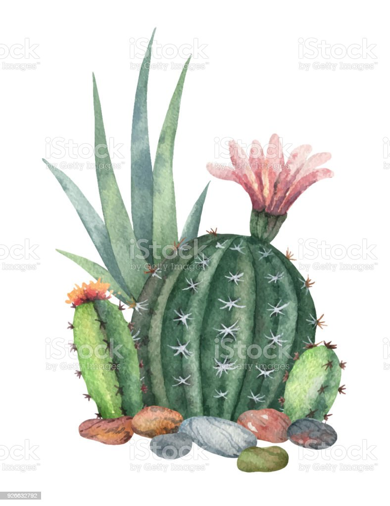 Watercolor vector collection of cacti and succulents plants isolated on white background. vector art illustration
