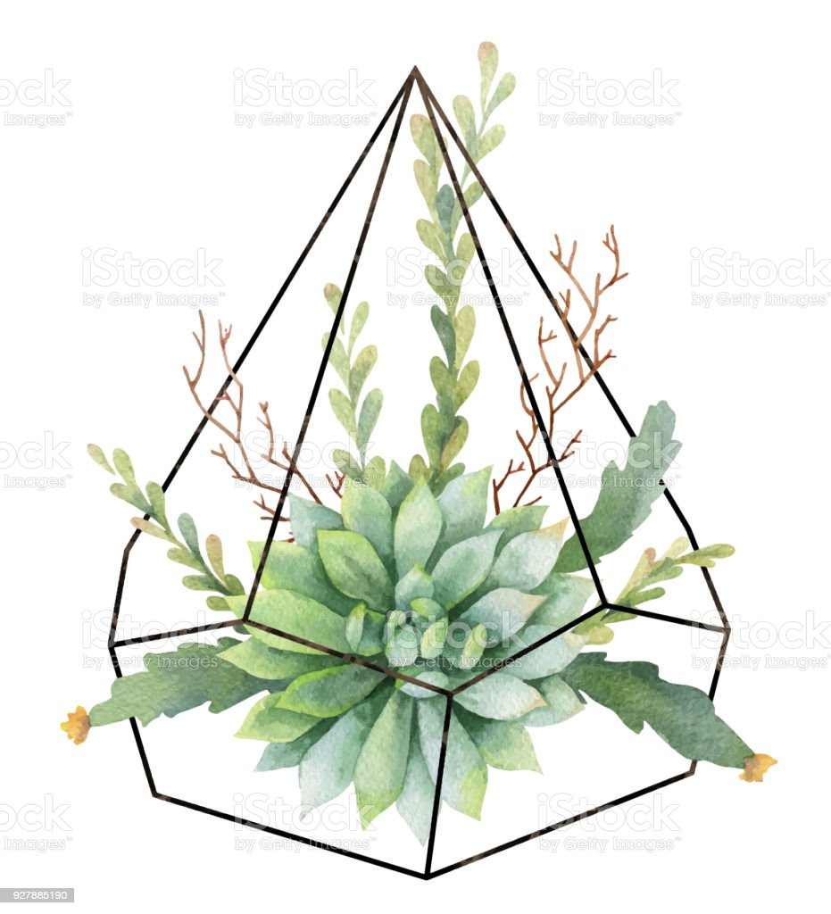 watercolor vector composition of cacti and succulents in terrariums geometric florariume. Black Bedroom Furniture Sets. Home Design Ideas