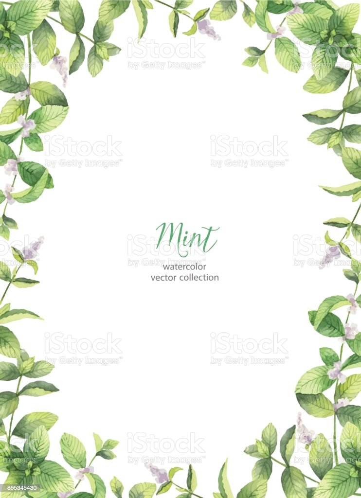 Watercolor vector frame of mint branches isolated on white background. vector art illustration