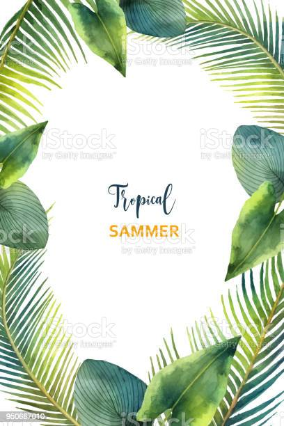 Watercolor vector frame tropical leaves and branches isolated on vector id950667010?b=1&k=6&m=950667010&s=612x612&h=ik  mjpa6qyinkha9xlka2l2phuqegv3iod4pclftf4=
