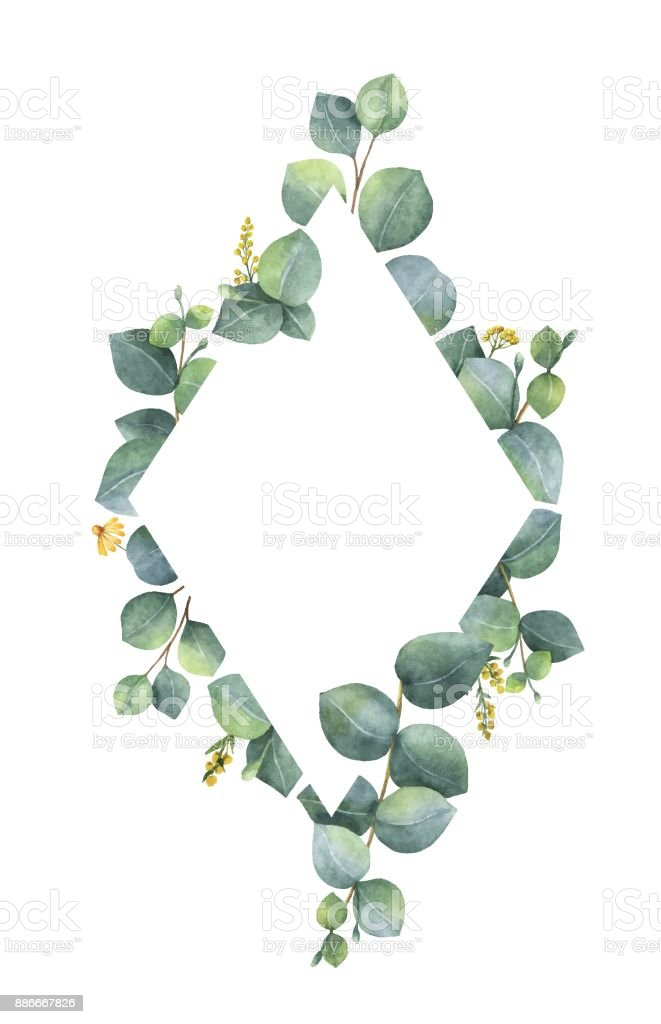 Aquarell Vektor Rahmen Mit Grünen Eukalyptusblätter Und Zweige Stock ...