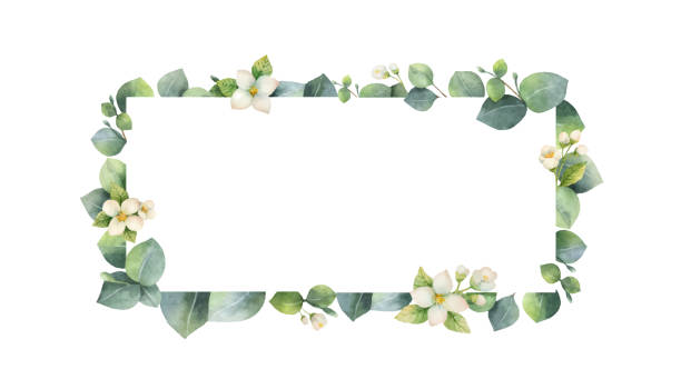 watercolor vector frame with green eucalyptus leaves, jasmine flowers and branches. - floral borders stock illustrations