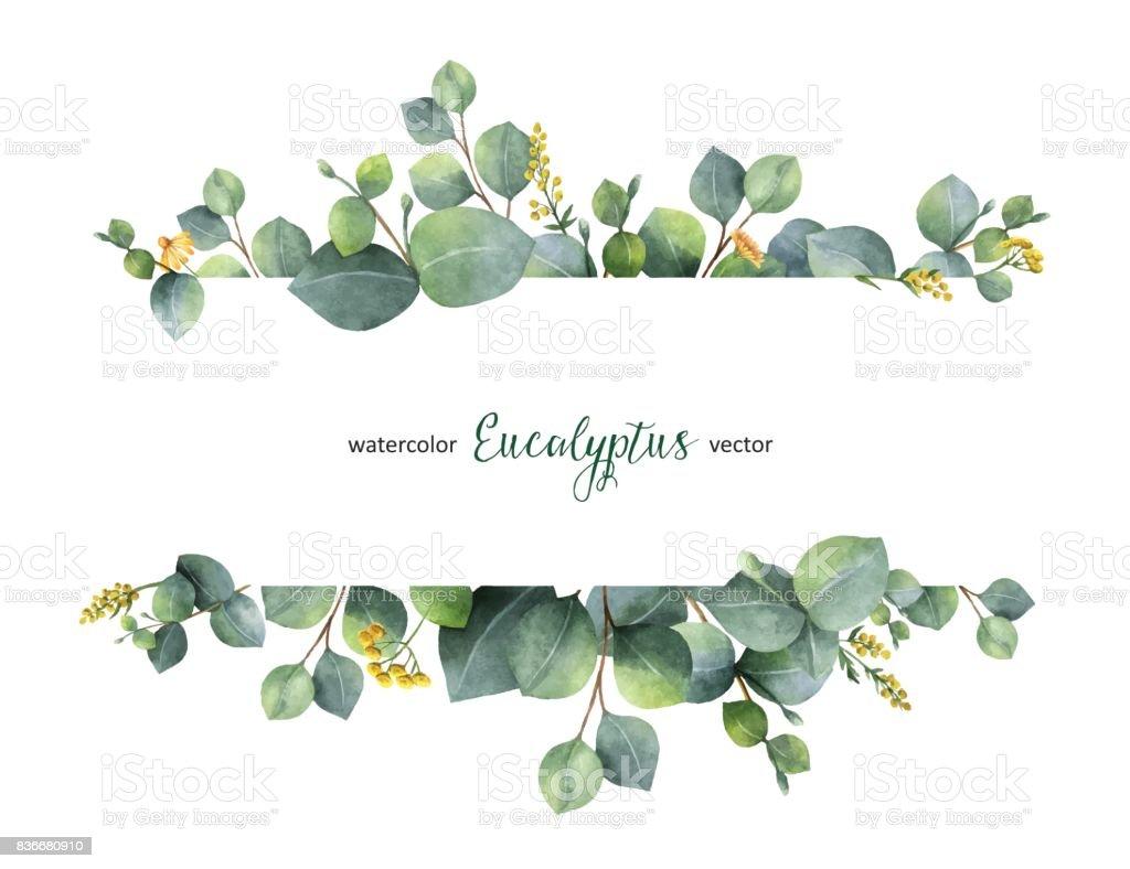 Aquarelle de vecteur vert floral banner avec silver dollar eucalyptus feuilles et branches isolés sur fond blanc. aquarelle de vecteur vert floral banner avec silver dollar eucalyptus feuilles et branches isolés sur fond blanc vecteurs libres de droits et plus d'images vectorielles de aquarelle libre de droits