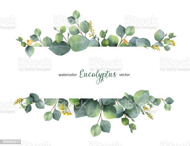 Watercolor vector green floral banner with silver dollar eucalyptus vector id836680910?b=1&k=6&m=836680910&s=612x612&h=coha trkcsfj9hw4janbugtm4w0i98at vr1maomrf8=