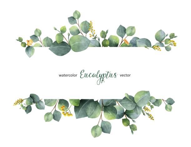akwarela wektor zielony kwiatowy sztandar ze srebrnym dolarem liści eukaliptusa i gałęzie izolowane na białym tle. - gałąź część rośliny stock illustrations
