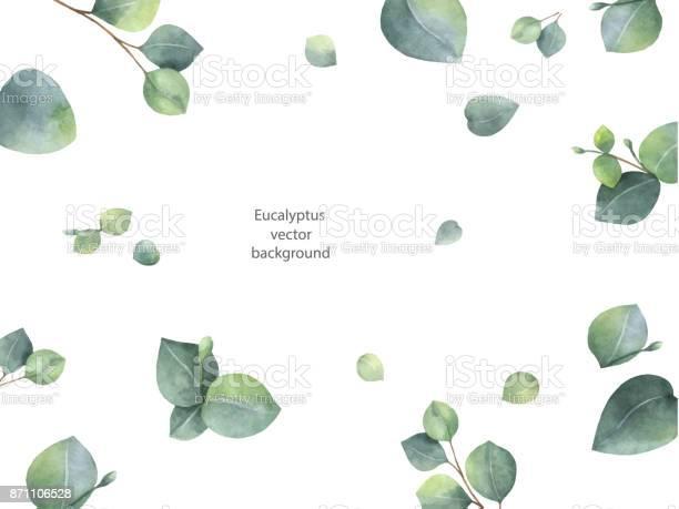 Watercolor vector green floral banner with silver dollar eucalyptus vector id871106528?b=1&k=6&m=871106528&s=612x612&h=dqlmrnfo4jjigpiywvcp 2fif9zlmndlfkkxeovxhb8=