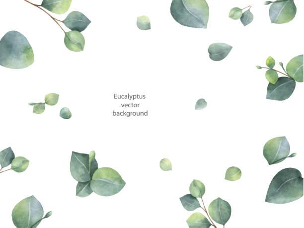 Aquarell Vektor grün floral Banner mit Silberdollar Eukalyptus-Blätter und Zweige, die isoliert auf weißem Hintergrund. – Vektorgrafik