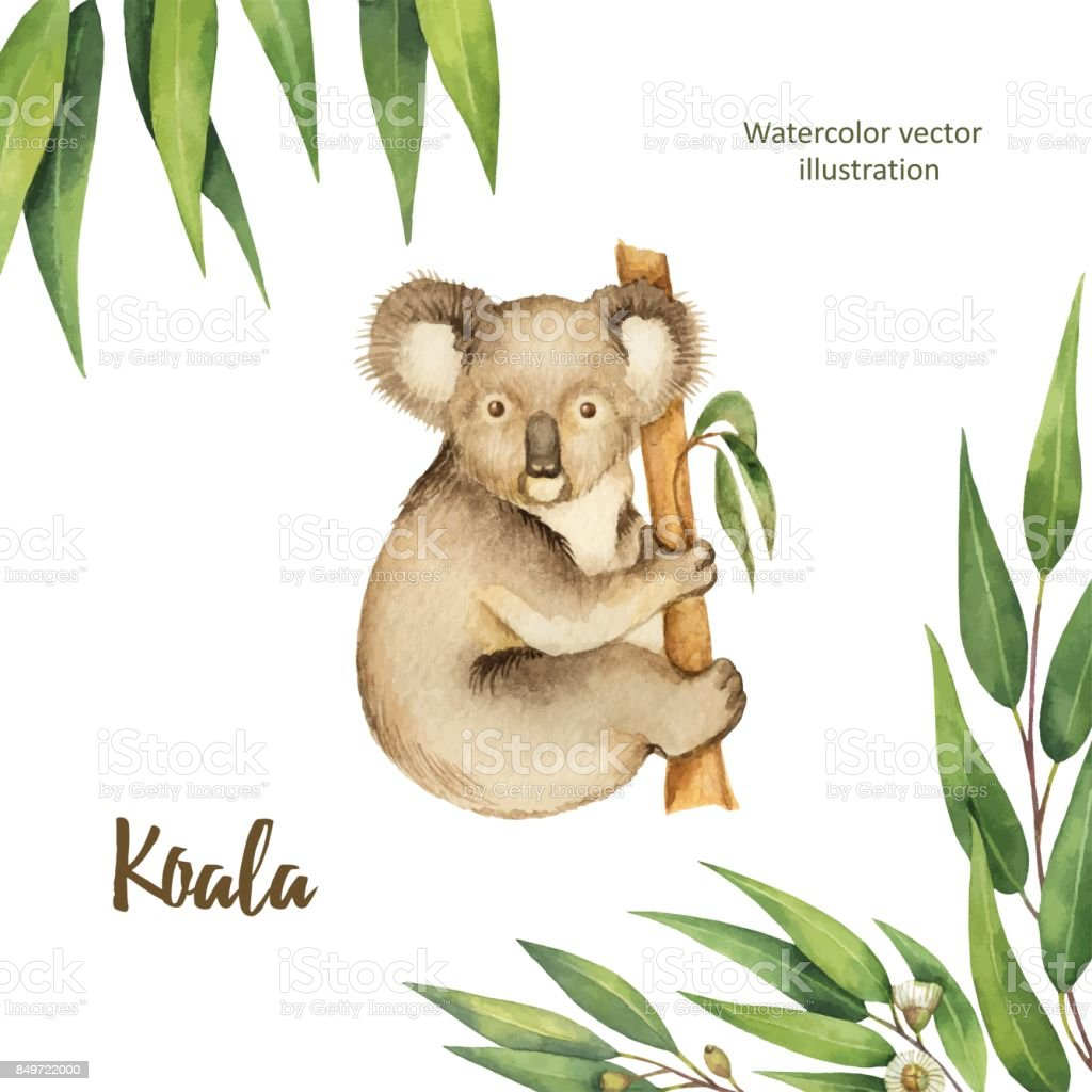 Watercolor vector green floral card with eucalyptus leaves and Koala isolated on white background. vector art illustration