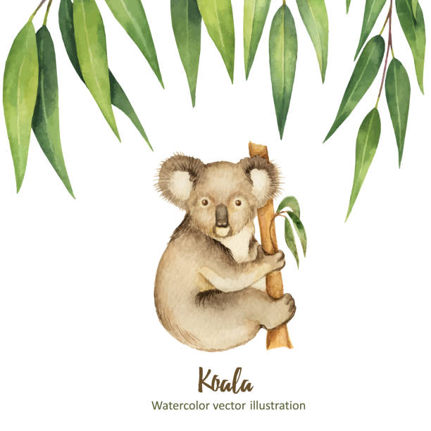 watercolor vector green floral card with eucalyptus leaves and koala isolated on white background. - koala stock illustrations