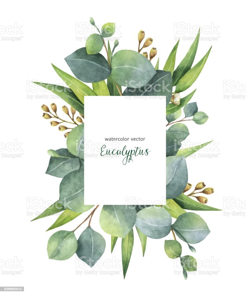 Watercolor vector green floral card with eucalyptus leaves and branches isolated on white background. vector art illustration