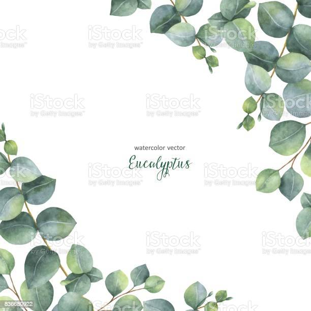 Watercolor vector green floral card with silver dollar eucalyptus vector id836680922?b=1&k=6&m=836680922&s=612x612&h=bn9xl kwrmk1jawg3 np sgleur0mjbzuh5p48b7qu0=