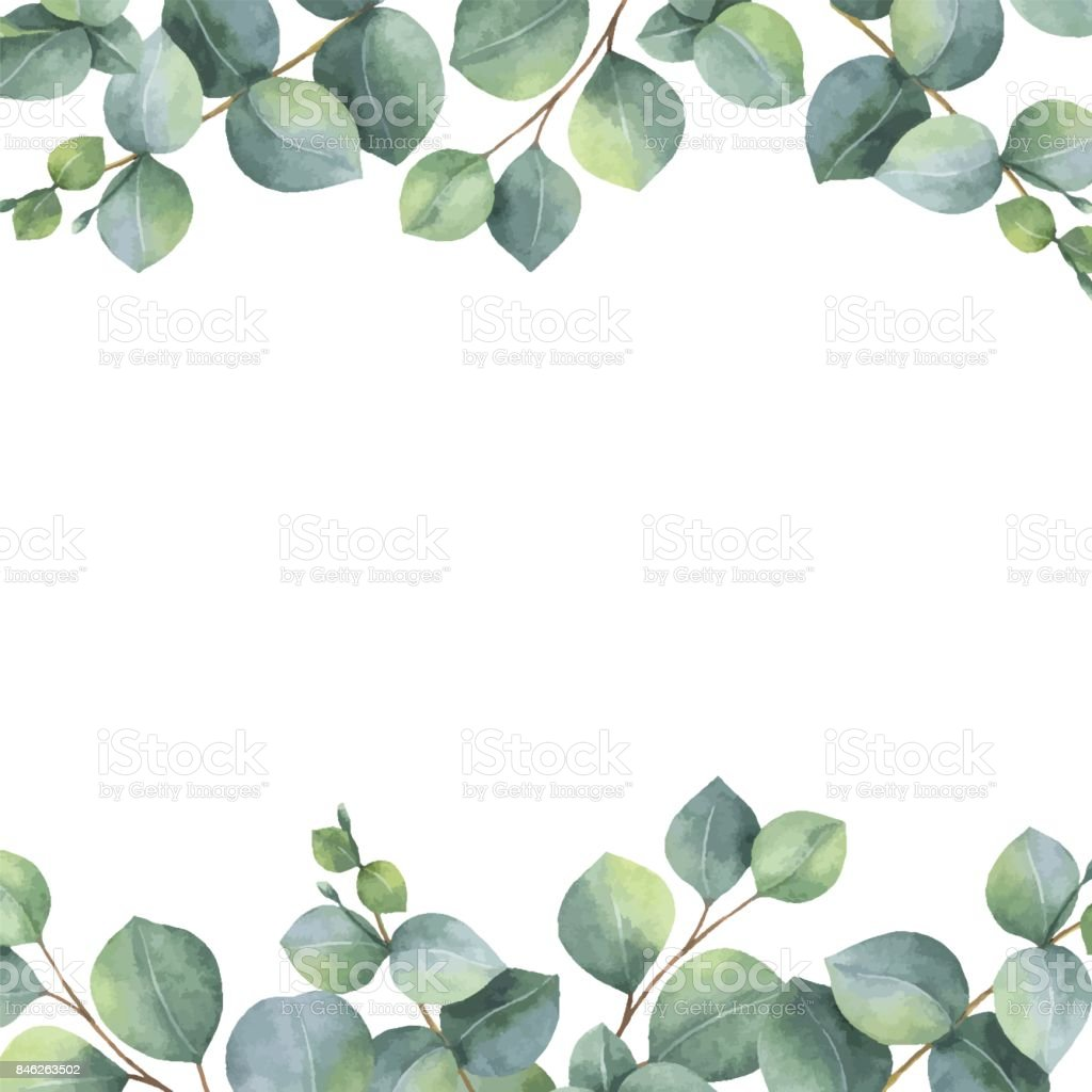 Watercolor vector green floral card with silver dollar eucalyptus leaves and branches isolated on white background. vector art illustration