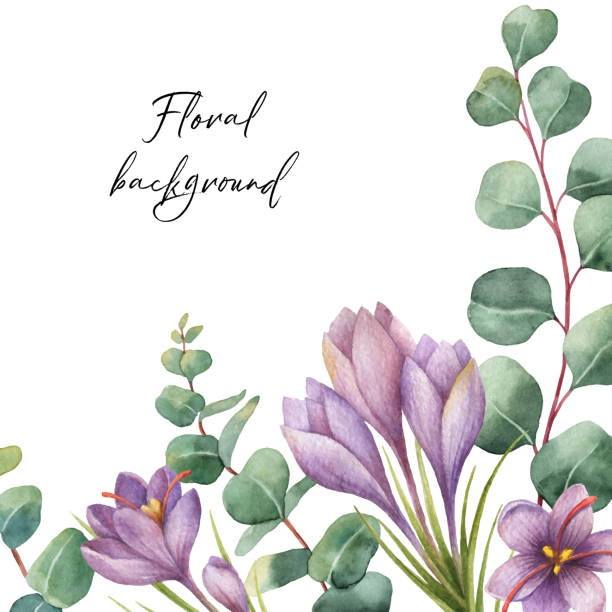 akwarela wektor zielony kwiatowy karty ze srebrnym dolarem liści eukaliptusa i kwiaty szafranu izolowane na białym tle. - gałąź część rośliny stock illustrations