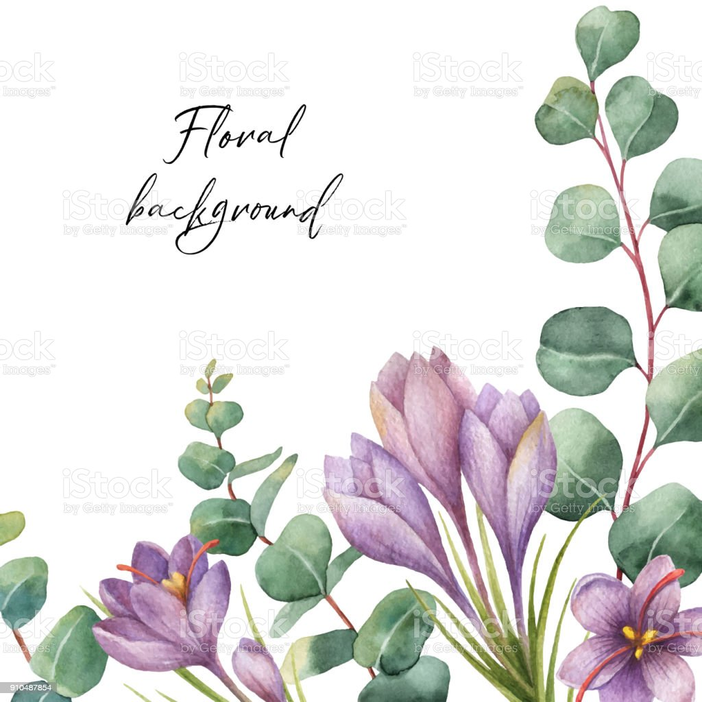 Watercolor vector green floral card with silver dollar eucalyptus leaves and flowers of saffron isolated on white background. vector art illustration