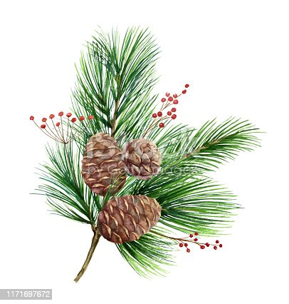 Watercolor vector green spruce bouquet with cones, Christmas tree. Illustration for greeting cards and invitations isolated on white background.