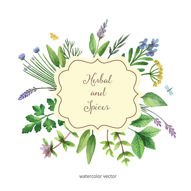 Watercolor vector hand painted banner with herbs and spices. Watercolor vector hand painted banner with herbs and spices. The perfect design for greeting card, skrabbuking, menus, packaging, kitchen decor, cosmetics, natural and organic products. Banner with space for text. dill stock illustrations