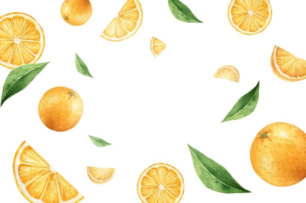 bildbanksillustrationer, clip art samt tecknat material och ikoner med akvarell vektor handmålat kort från apelsinfrukter och gröna blad. färsk mat koncept isoleras på vit bakgrund. - apelsin