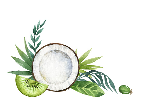 Watercolor vector, hand painted card of exotic fruits kiwi, coconut, feijoa and palm branches. Fresh food design elements isolated on white background. Illustration for magazines, websites, posters, invitations and postcards.