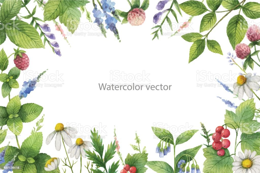 Watercolor vector hand painted floral frame with green herbs and spices. vector art illustration