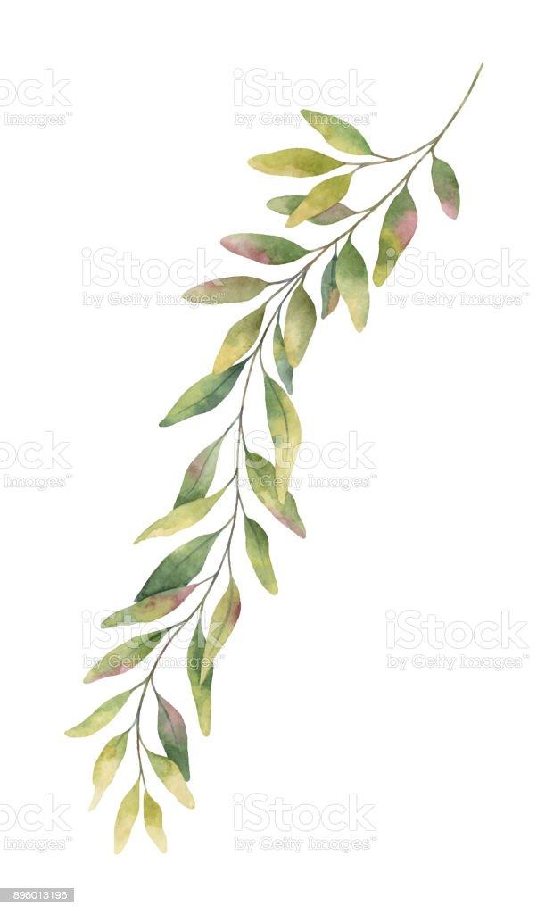 Watercolor vector hand painted green eucalyptus branch.