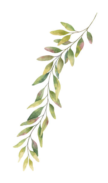 watercolor vector hand painted green eucalyptus branch. - vine stock illustrations, clip art, cartoons, & icons