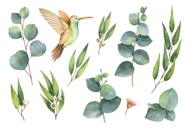 watercolor vector hand painted set with eucalyptus leaves and hummingbird. - birds stock illustrations