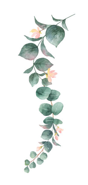 watercolor vector hand painted silver dollar eucalyptus leaves and pink flowers. - vine stock illustrations, clip art, cartoons, & icons