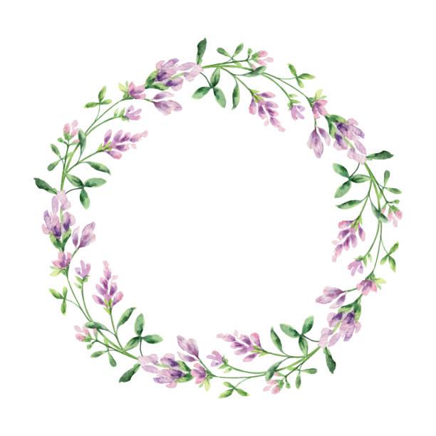 illustrazioni stock, clip art, cartoni animati e icone di tendenza di watercolor vector hand painted wreaths with alfalfa . - erba medica