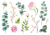 Watercolor vector hand painting set of peony flowers and green leaves.