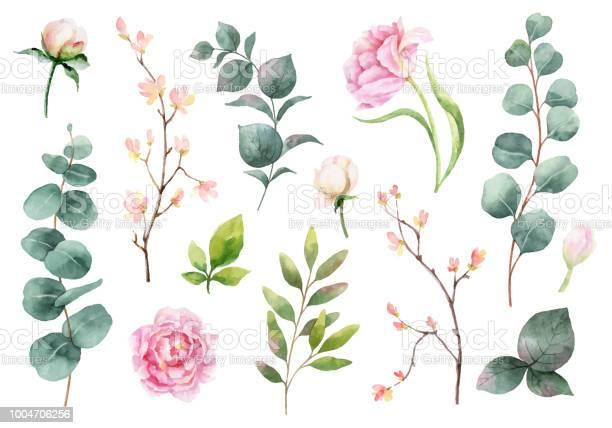 Aquarel Vector Hand Schilderij Set Peony Bloemen En Groene Bladeren Stockvectorkunst en meer beelden van Aquarel