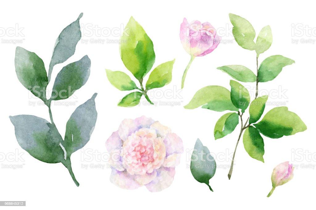 Ilustración de Acuarela De Vector Mano Pintura Conjunto De Flores De ...