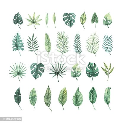 istock Watercolor vector illustration. Summer tropical collection with banana leaves, monstera and palm leaves. Perfect for wedding invitations, prints, postcards, posters 1259388208