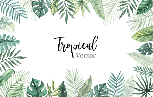 Watercolor vector illustration. Summer tropical frame with banana leaves, monstera and palm leaves. Perfect for wedding invitations, prints, postcards, posters