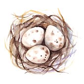 Watercolor vector nest with quail eggs isolated