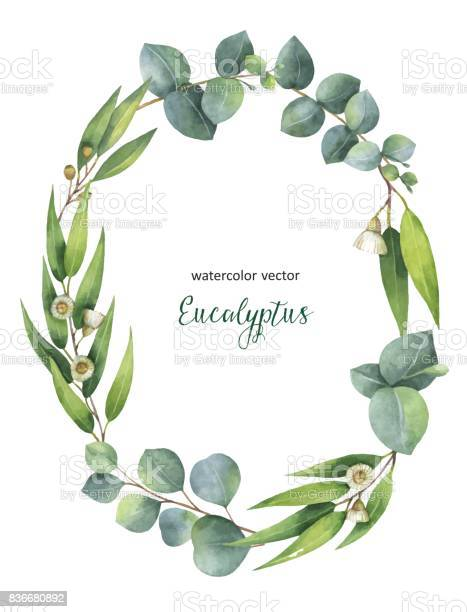 Watercolor vector oval wreath with green eucalyptus leaves and vector id836680892?b=1&k=6&m=836680892&s=612x612&h=hj6pk fc0xm1npjwnixqplc0fch83evq75pgprcki2k=