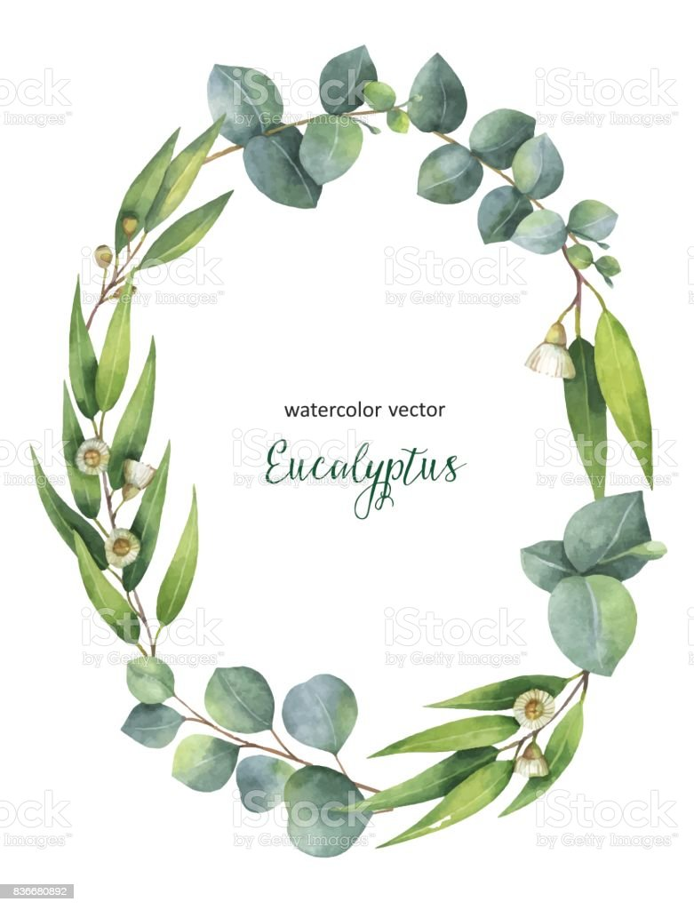 Watercolor vector oval wreath with green eucalyptus leaves and branches. vector art illustration