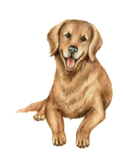 watercolor vector retriever isolated on white background. - wildlife calendar stock illustrations, clip art, cartoons, & icons