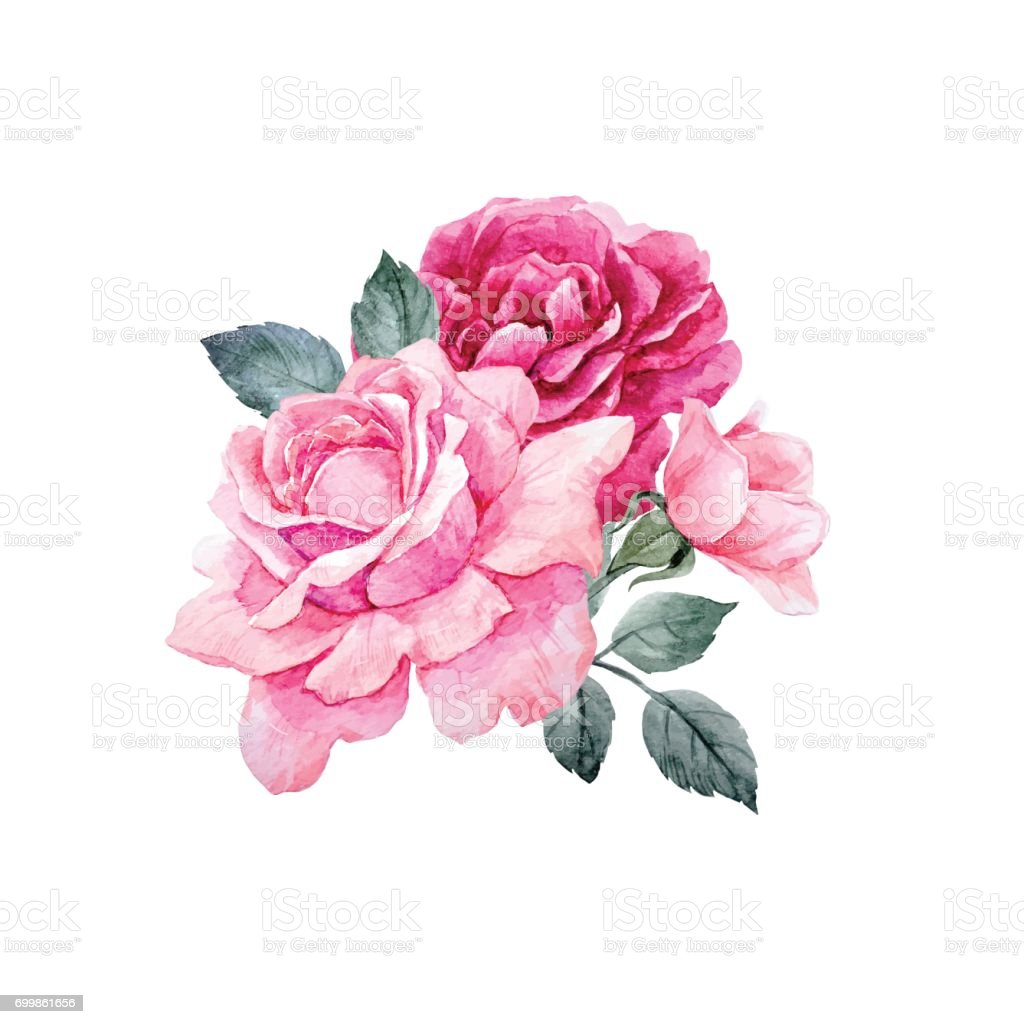 Watercolor vector roses composition