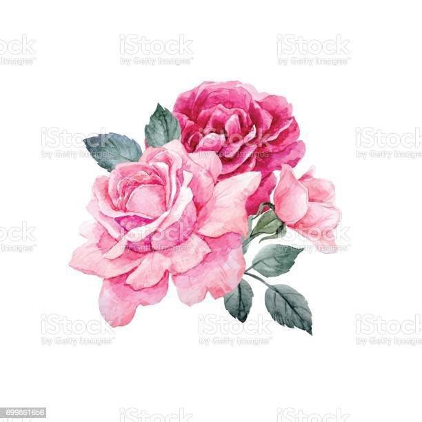 Watercolor vector roses composition vector id699861656?b=1&k=6&m=699861656&s=612x612&h=udcr6xp 4y7h5cj sgajv4w1a9iqpzwg0ys7v8aisnw=