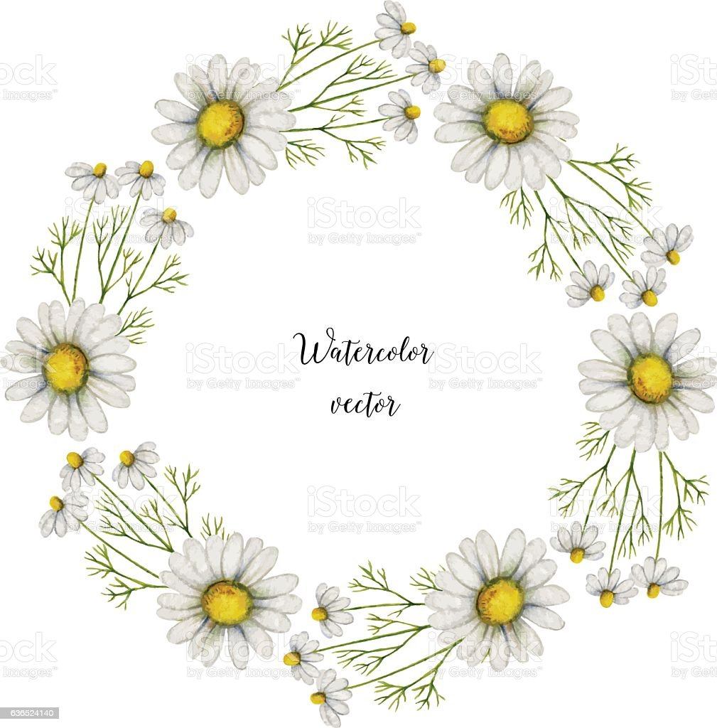 Watercolor vector round frame of chamomile. vector art illustration