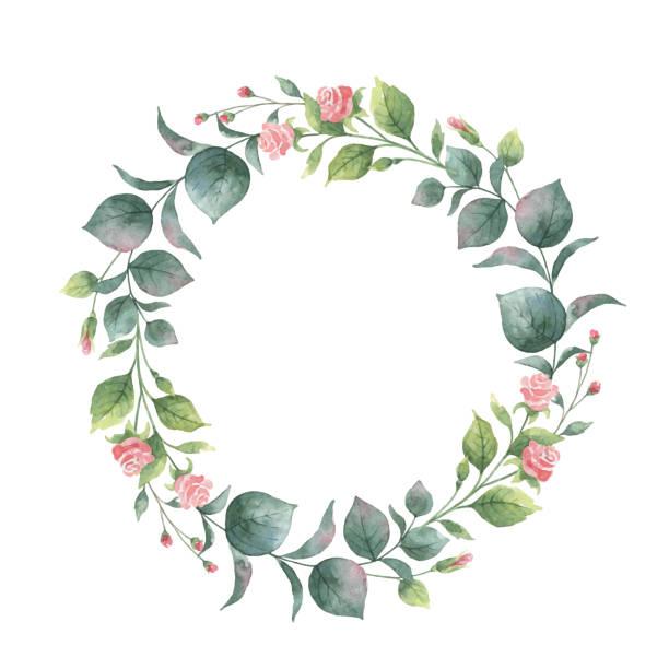 aquarell vektor runden kranz mit eukalyptus-blätter und zweige. - rosenpflanzen stock-grafiken, -clipart, -cartoons und -symbole