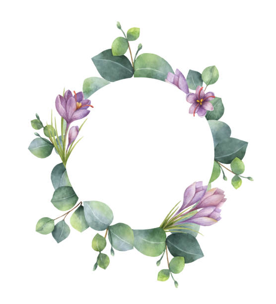 Watercolor vector round wreath with eucalyptus leaves and flowers of saffron. Watercolor vector hand painted round wreath with eucalyptus and flowers of saffron. Healing Herbs for cards, wedding invitation, posters, save the date or greeting design. violet flower stock illustrations