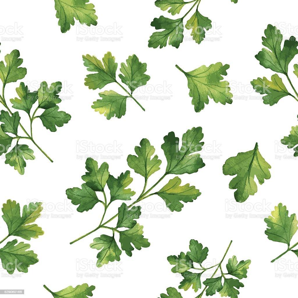 Aquarelle vecteur dessiné à la main motif uniforme aux herbes et de coriandre. - Illustration vectorielle