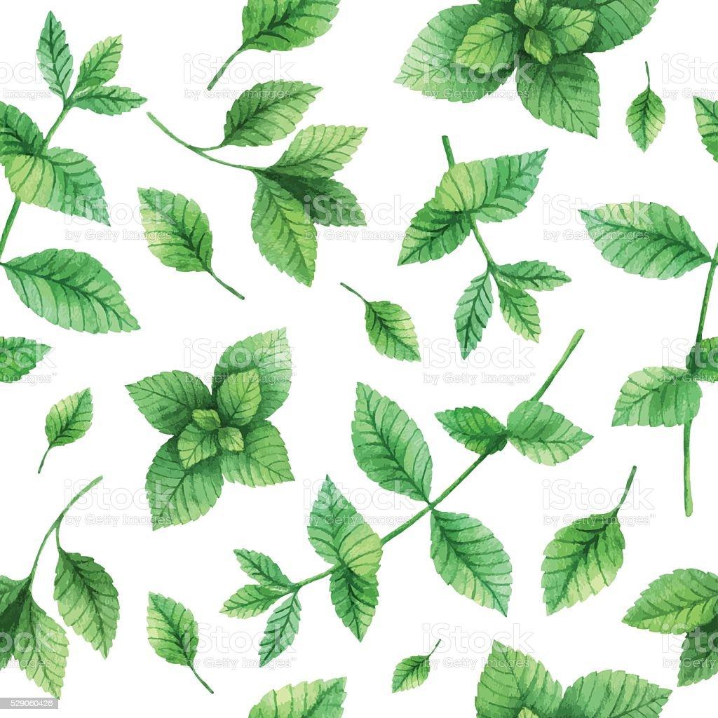 Aquarelle motif uniforme de vecteur dessiné à la main, à la menthe et aux herbes. - Illustration vectorielle