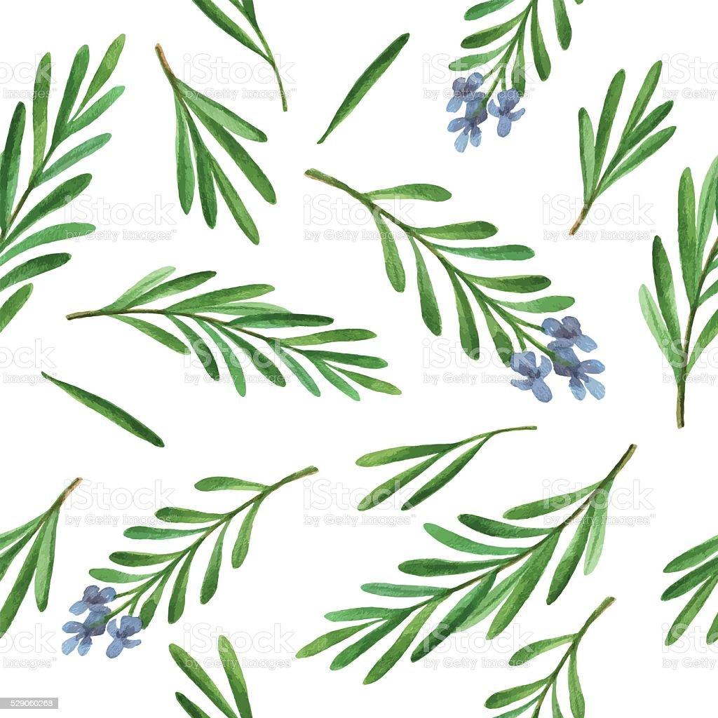 Aquarela sem costura padrão vetorial mão desenhada ervas e alecrim. - ilustração de arte em vetor