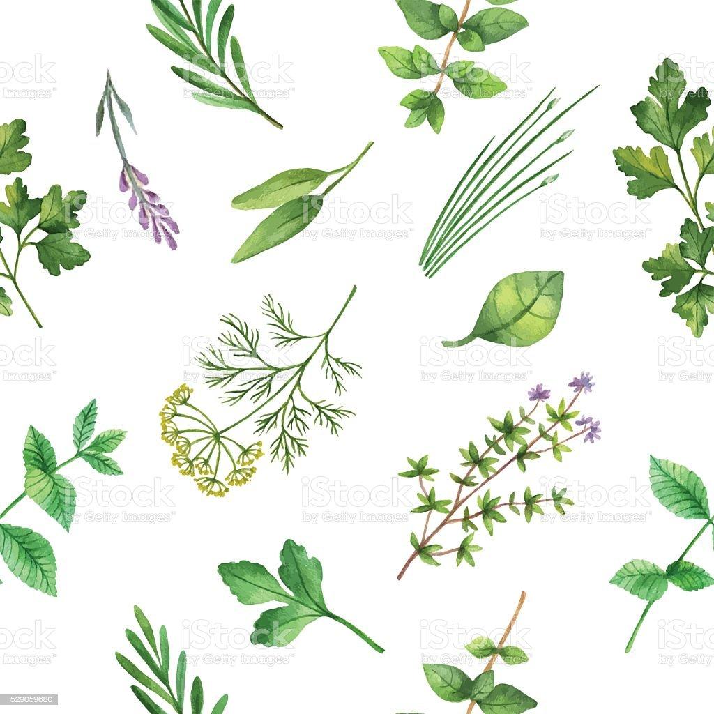 Acuarela patrón continuo dibujado a mano Vector de de hierbas. - ilustración de arte vectorial